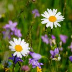 flower-meadow-3434428_1920